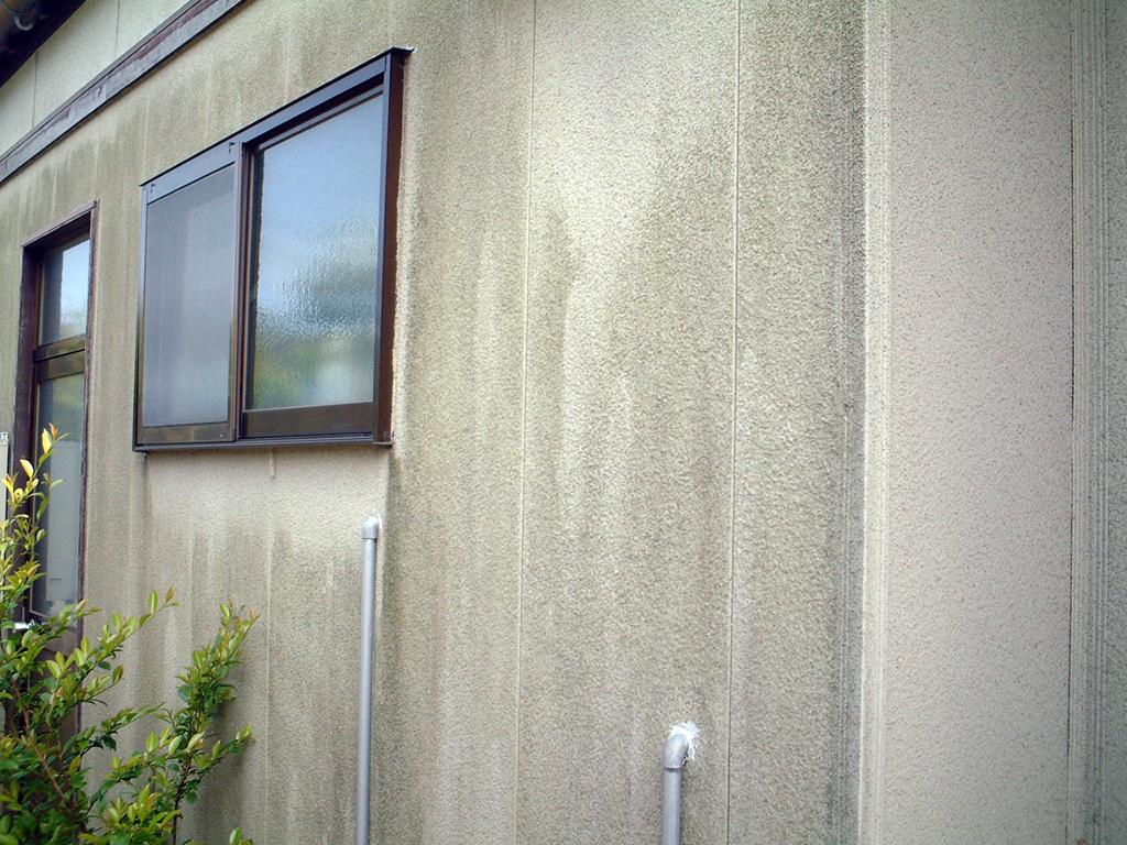 藻・カビによる汚れ